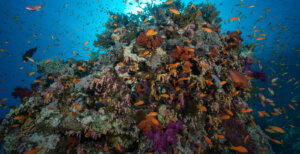 ras mohamed diving