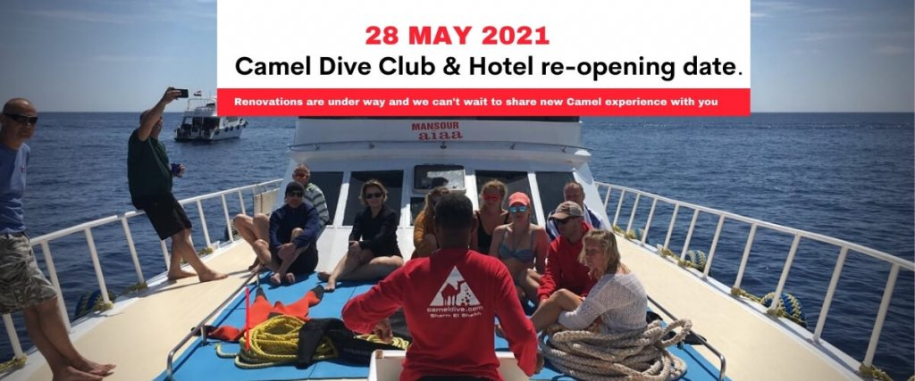 Camel re-opening 2021