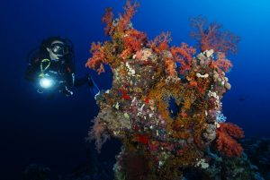 PADI Night Diver Specialty