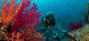 Red Sea Diving in November