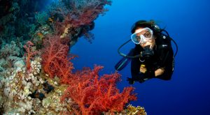 diving holiday package